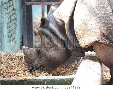Rhino In The Zoo