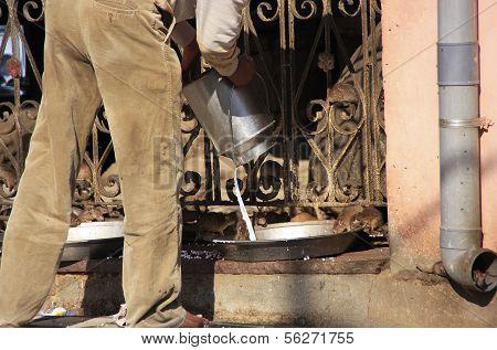 Man pouring milk for rats Karni Mata Temple Deshnok Rajasthan India poster