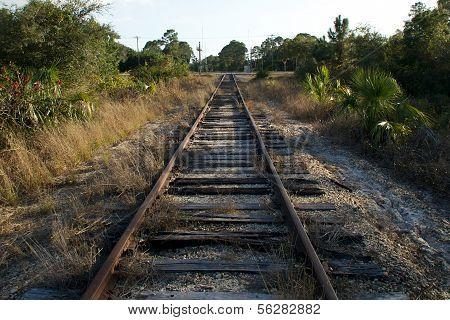 Railroad Tracks In Florida