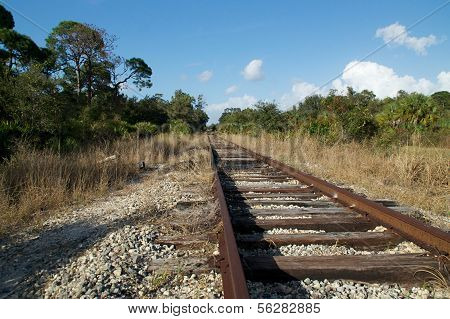 Railroad Tracks In Wilderness