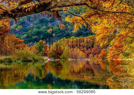 Beautiful Fall Color on Giant Cypress Trees Reflected in the Clear Waters of the Frio River, Texas