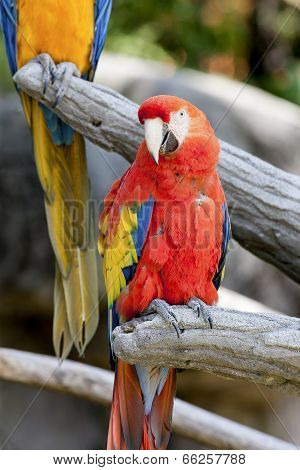 Parrot On Its Perch