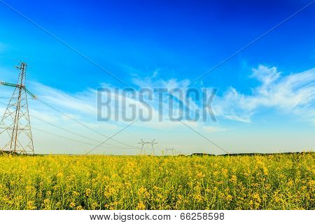 High voltage powerline in blooming rapeseed field