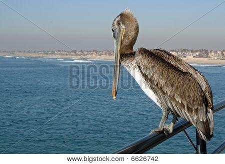 Pelican on Rail