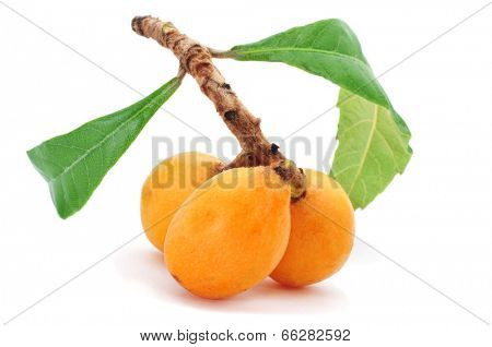some loquats in a branch on a white background