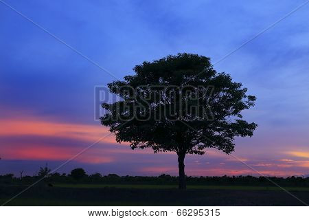 Silhouettes Of Tree Beautiful Sunset Sky