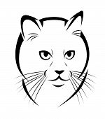Stylized face of cat isolated on white background. poster