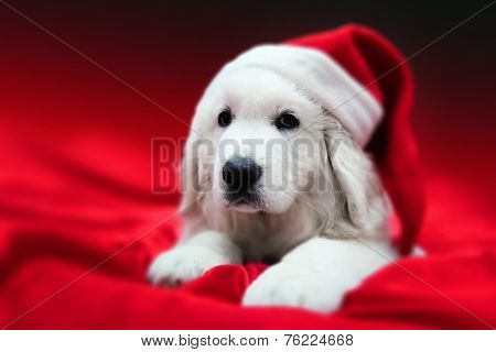 Cute white puppy dog in Chrstimas hat lying in red satin. Holiday theme, greeting card.