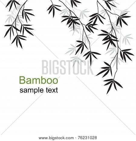 Green bamboo branches