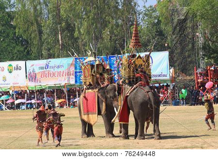 Elephant duel show in Surin Elephant Round-up 2014