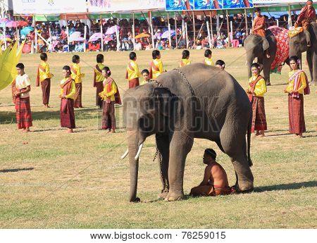 mahout hide the sun light under elephant