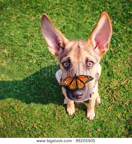 a cute dog in the grass at a park during summer with a butterfly on his or her nose