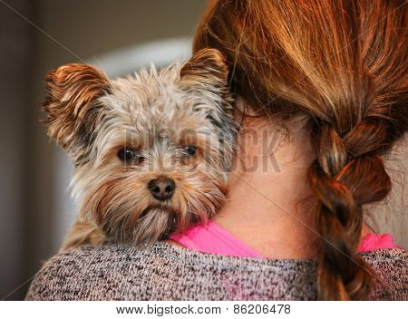 a cute yorkshire terrier peeking from around a woman