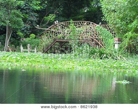 Bridge & Lake View