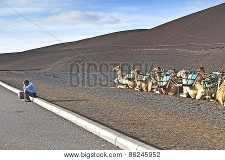 camel guides wait for tourists at Timanfaya Spain