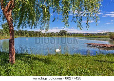 Tree, green grass and small lake on background in Piedmont, Northern Italy.