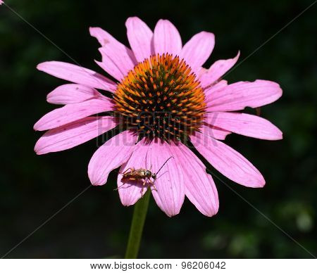 A Bug On A Flower
