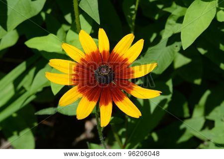 Colorful Red and Yellow Flower