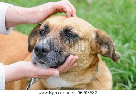 Dog During Walking
