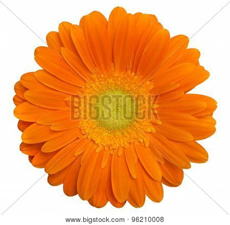 Single Orange Gerbera