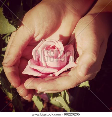 Instagram Of  A Childs Dirty Garden Hands Holding Rose
