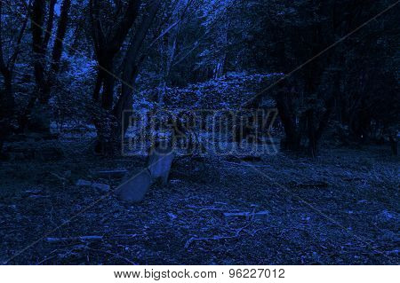 Old Cemetery At The Night
