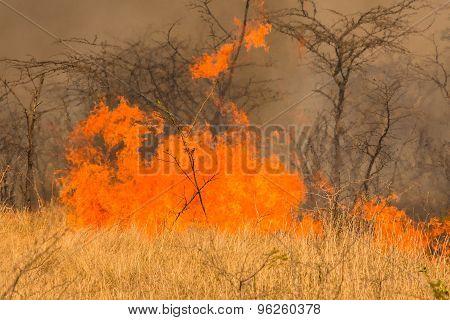 Bushfire disaster