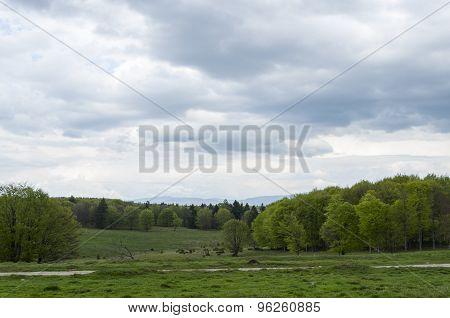 Harghita landscape