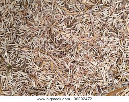 Dry Bamboo Flower Fall On Ground As Background