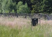 Pheromone trap for bark beetle in grass on meadow near forest . poster