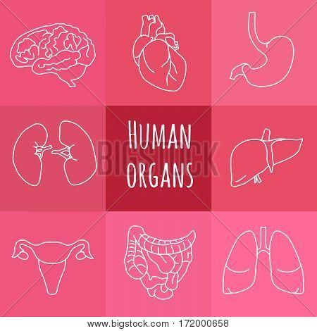 Vector set of human anatomy icons on pink