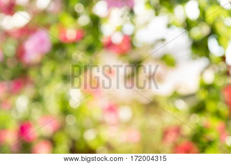 Natural blurred bokeh background from leaf and tree Abstract background.