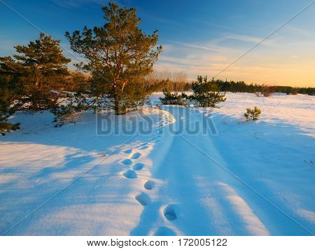 majestic golden light from snow in frosty evening
