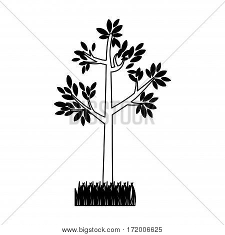 contour silhouette tree leafy with bush vector illustration
