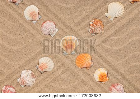 Intersection of two lines composed of seashells. View from above