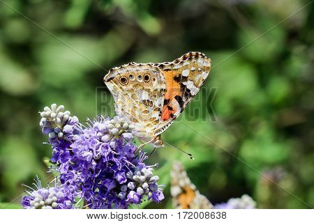 Fletches of butterfly on butterflies Flowers, summer, nature