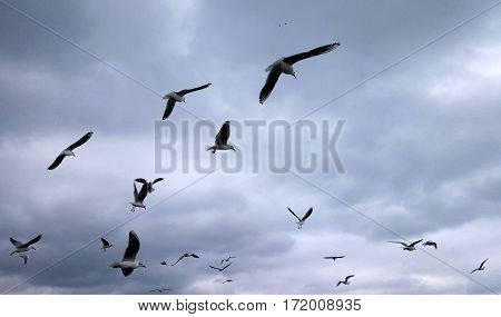 A flock of seagulls on cloudy sky background
