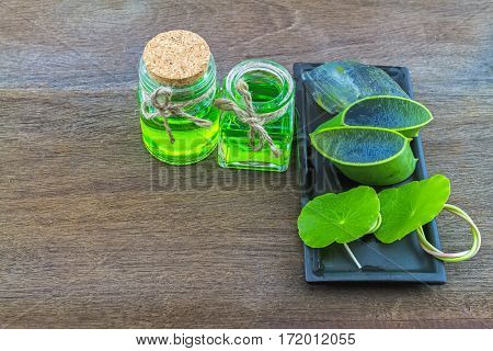Slice Aloe Vera (Aloe barbadensis Mill.Star cactus Aloin Jafferabad or Barbados) Aloe vera essential oil with Green Asiatic Pennywort in ceramic dish on wooden