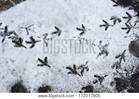 Small traces of birds on the grey snow.