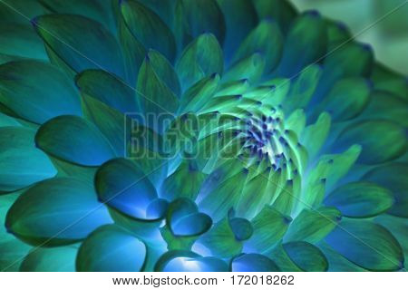 Psychedelic, hippie, blue dahlia flower abstract background