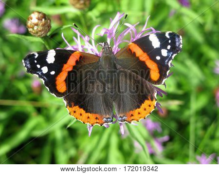 bright tropical colored butterfly on green background