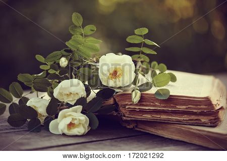 White dogrose lies on the open old books on a wooden table