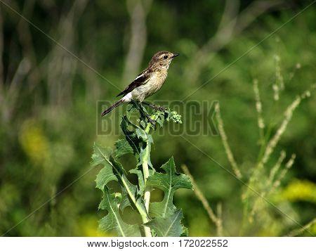 Птичка такая маленькая и легкая, что сидит на траве. The bird is so small and light that sits on the grass.