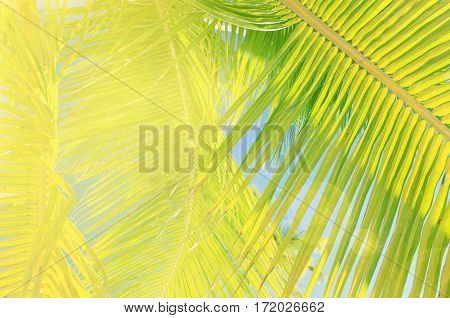 Sunlit palm tree leaves. Tropical vacation background with blur and flares. Soft retro toned.