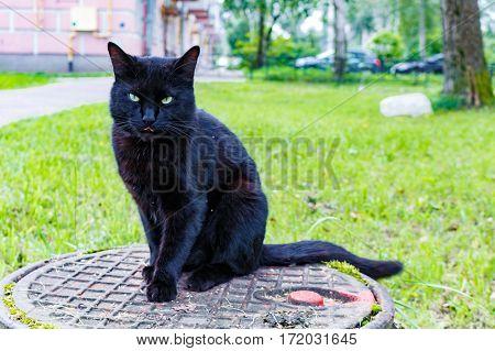 Black Cat Sitting On A Sewer Manhole