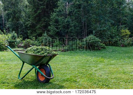 Wheelbarrow With Cut Grass In The Garden. A Park.  Cart  One Wheel.