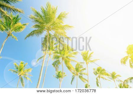 High palm with sunflare effect and sky background. Tropical beach relaxation, empty space right side.