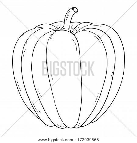 Pumpkin. Hand drawing sketch, contour outline. Vector illustration