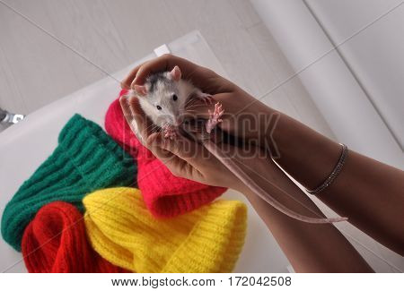 white little mouse sitting in the palms