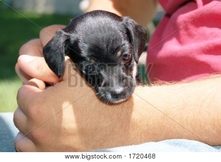 Puppy, Terrier Mix